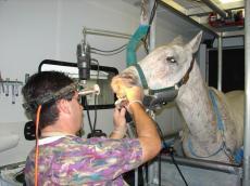 Veterinary Lamps (9)