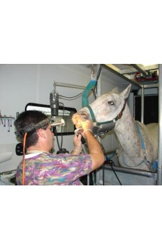 Replacement Veterinary Lamps